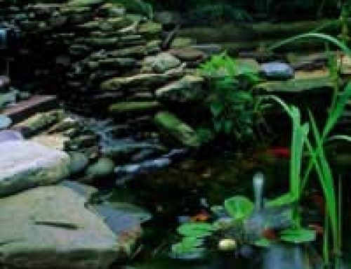 Aerating Your Pond