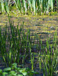 Dealing With Silt in Your Pond