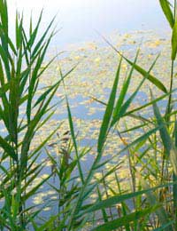 Managing Plant Overgrowth Within Your Pond