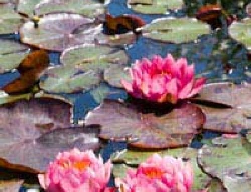 Are You a Water Plant Expert?