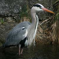 How We Dealt With a Hungry Heron: Case Study