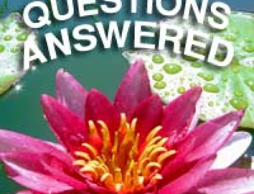 Your Top Pond Questions Answered