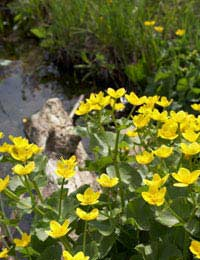 Plants for Your Pond