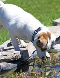 Pets and Pond Safety