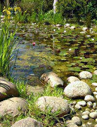 Siting Your Pond