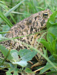 Newts and Toads
