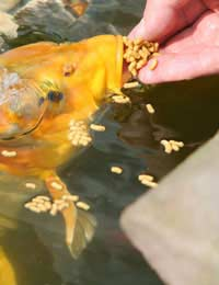Filtering Your Pond